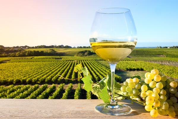 Le vin blanc